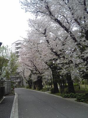 070405_sakura2.jpg